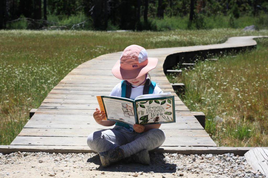 Reading Trees Leaves Bark