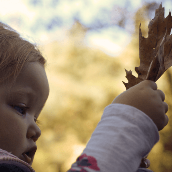 Fun Outdoor Activity: Identifying Nature Patterns